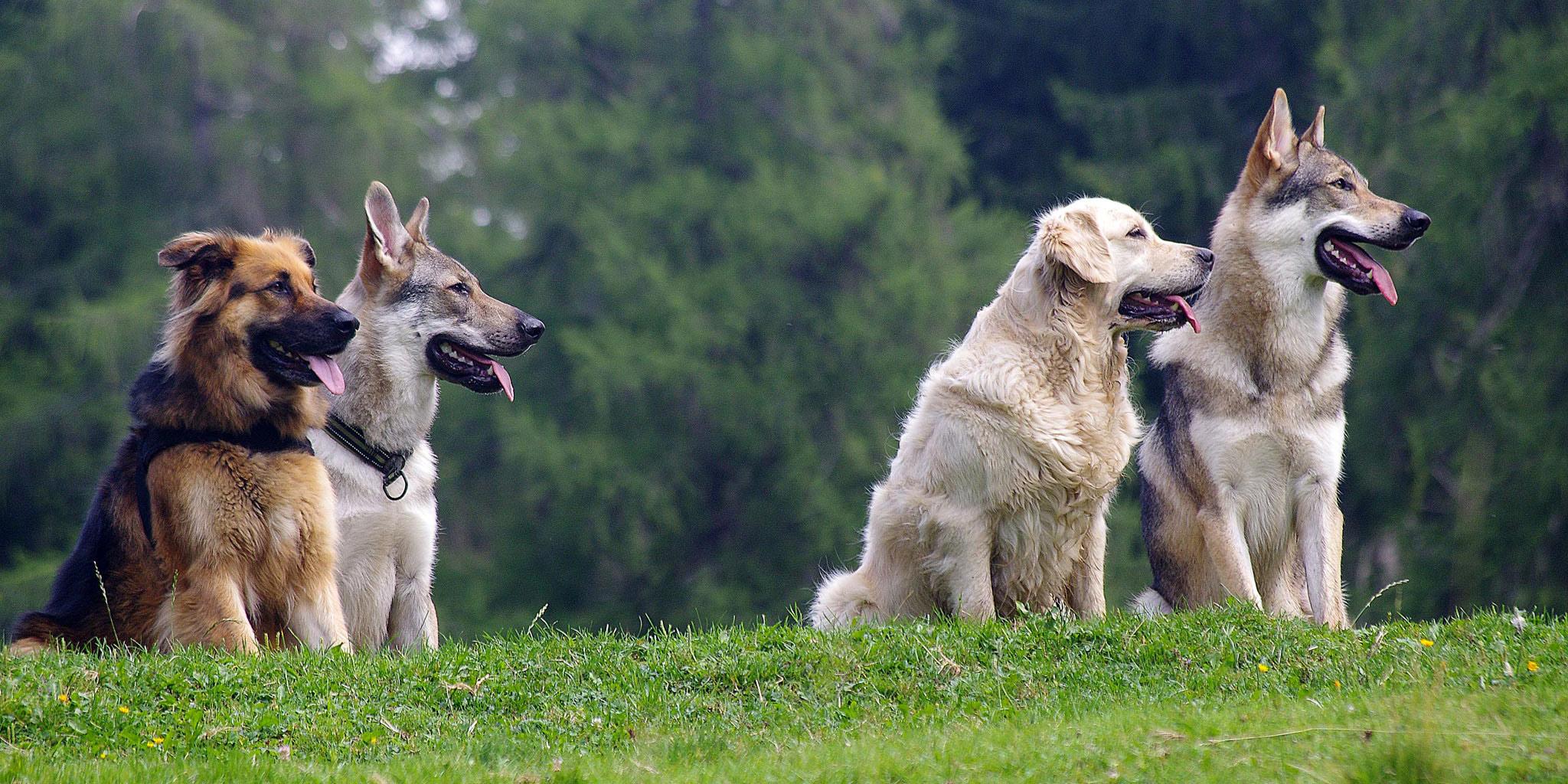 slider_dog_safari_001